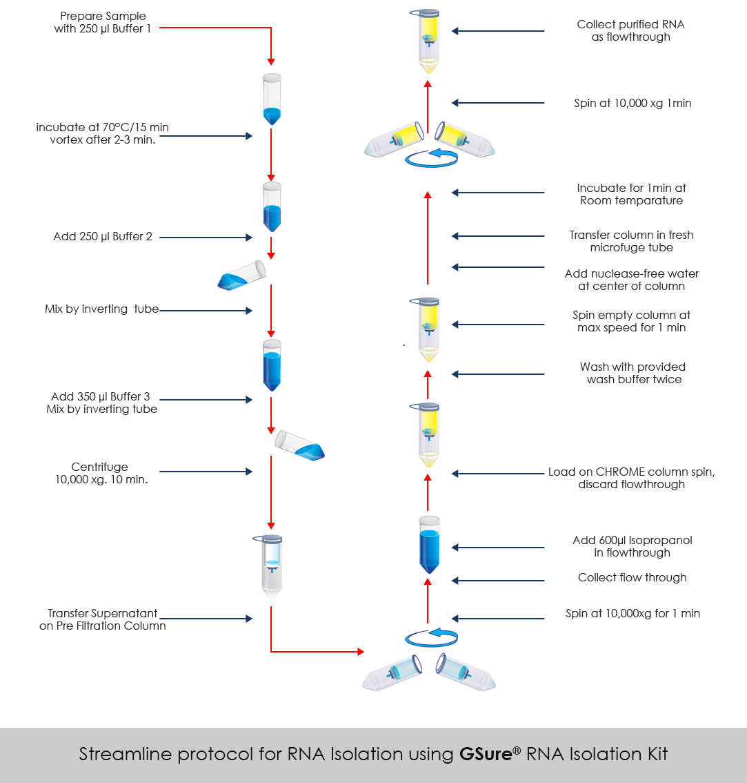 GSure® Blood RNA Isolation Kit GCC Biotech (I) Pvt. Ltd